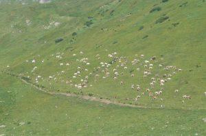Lunedì 7 e Martedì 8 settembre scarico Alpe Piora!