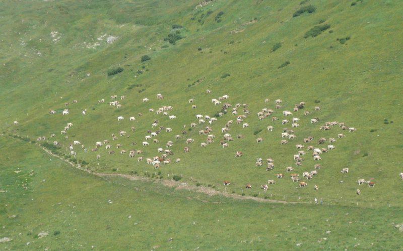 Venerdì 7 e Sabato 8 settembre scarico Alpe Piora