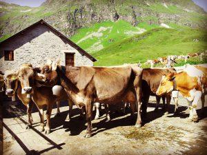 Piora Alp Festival